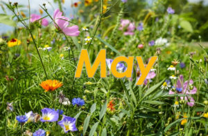 May at The Fulcrum Group