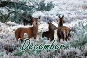 December at The Fulcrum Group